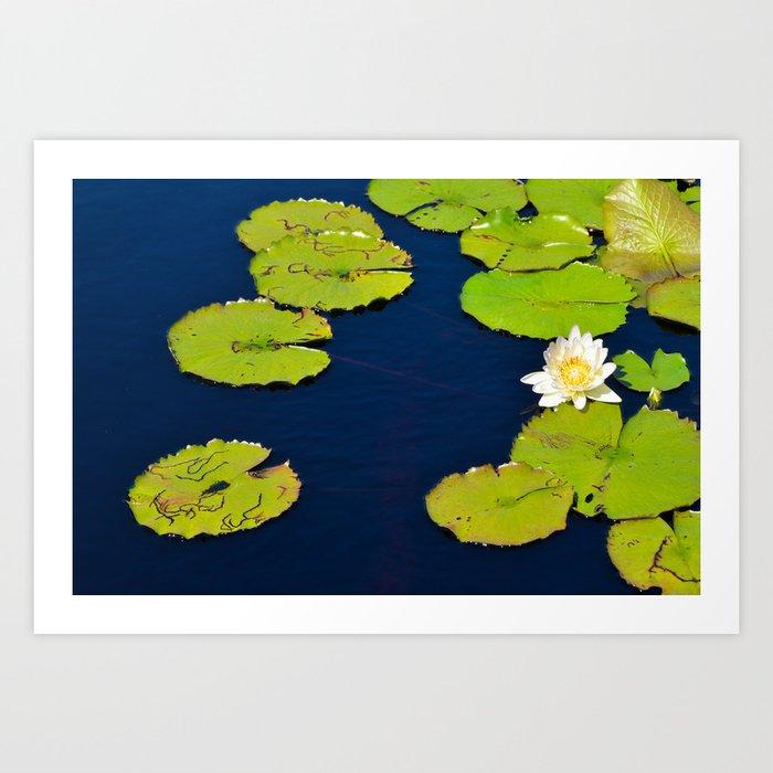 Dark Blue Pond by Teresa Thompson Art Print