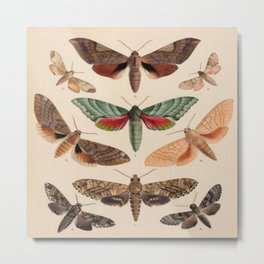 Vintage Natural History Moths Metal Print