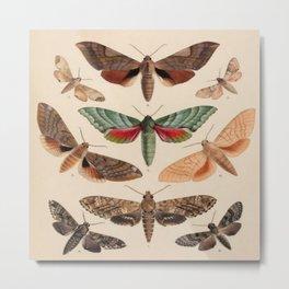 Vintage Natural History Moths Metal Print