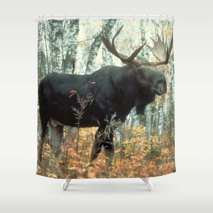 Huge Moose Shower Curtain By Bravuramedia
