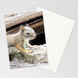 Watercolor Pine Squirrel 11, Longs Peak Trail, Colorado Stationery Cards
