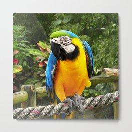 Exotic Macaw Parrot Metal Print