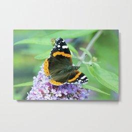 Butterfly VII Metal Print