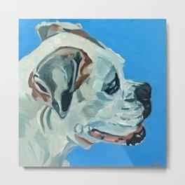 Holly the White Boxer Dog Metal Print