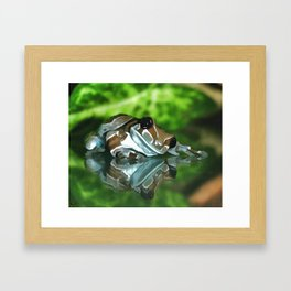 Amazon Milk Frog Framed Art Print