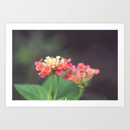Tiny Lovelies Art Print