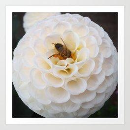 Dahlia Bee 2 Art Print