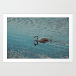Swan lake in blue Art Print