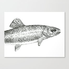 Rainbow Trout Drawing Canvas Print