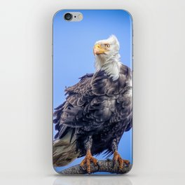 Eagle in Breeze iPhone Skin