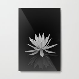 Water Lily on Black Metal Print