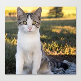 Kountry Kitty II Canvas Print