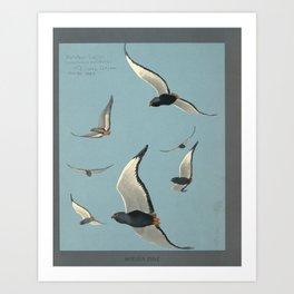 Fuertes, Louis Agassiz (1874-1927) - Album of Abyssinian Birds & Mammals 1930 (Bateleur Eagle 1) Art Print