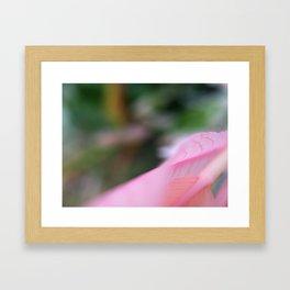 *Blush Framed Art Print
