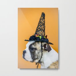 Beautiful Profile of a Bulldog Wearing a Witch Hat for Halloween Metal Print