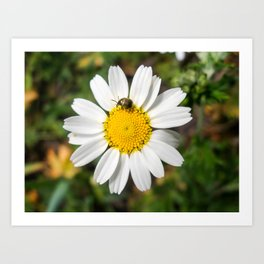 Magic Field Summer Grass - Chamomile Flower with Bug - Macro Art Print