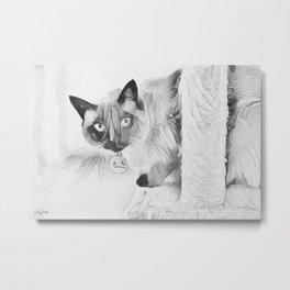 Peek A Boo Kitty Metal Print