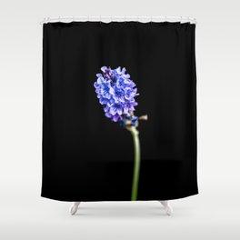 Lavandula pinnata Shower Curtain
