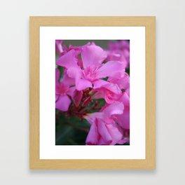 Pink Oleander Flower  Framed Art Print
