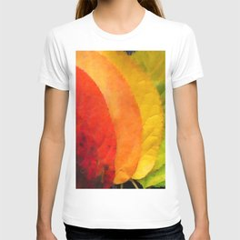 Collection beautiful colorful autumn leaves T-shirt