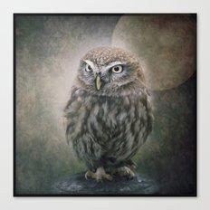 Little Owl Canvas Print