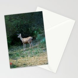 The Forest Fringe Stationery Cards