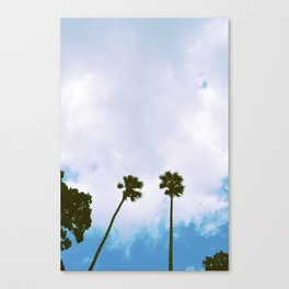 Sinkhole Palms Canvas Print