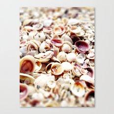 Seashells at the Seashore Canvas Print