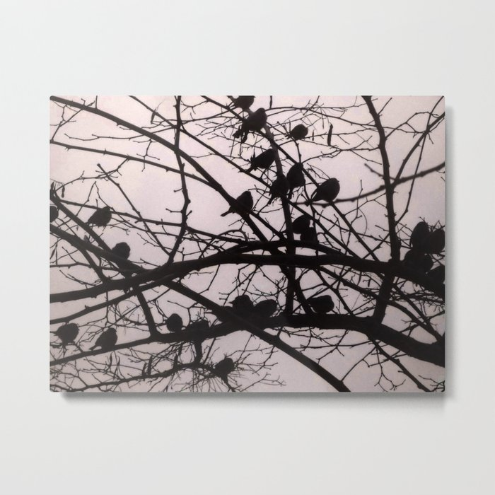 Birds Silhouettes Metal Print