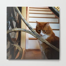 kitty: deep in thought Metal Print