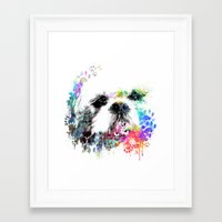 shih tzu Framed Art Prints featuring Shih TZU  by PhotosbySN