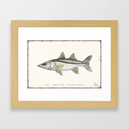"""Snook"" by Amber Marine - Centropomus undecimalis ~ Watercolor Illustration, (Copyright 2013) Framed Art Print"