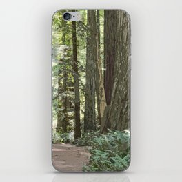 SUNNY REDWOOD TRAIL IN THE STOUT GROVE iPhone Skin