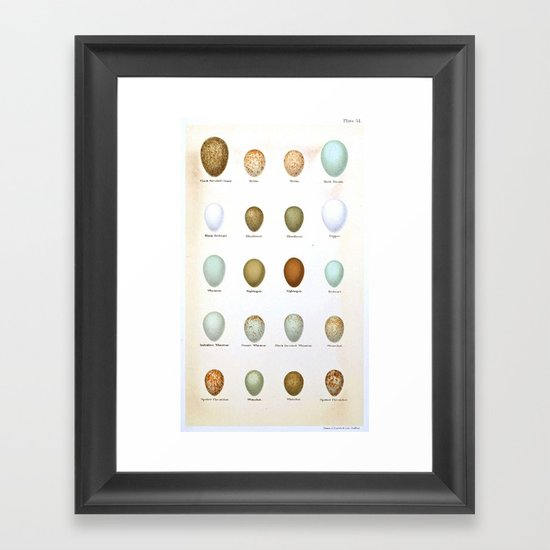 Vintage Bird Eggs  Framed Art Print