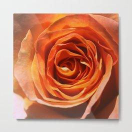 Vavoom Rose Metal Print
