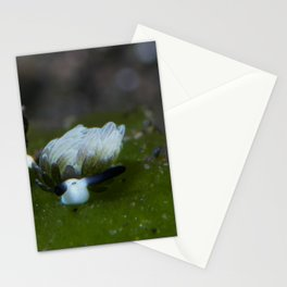 Little sheep nudi (Costasiella usagi) Stationery Cards
