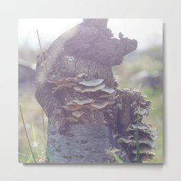 Magic Tree Metal Print