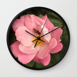 A rose and the fly insect Wall Clock