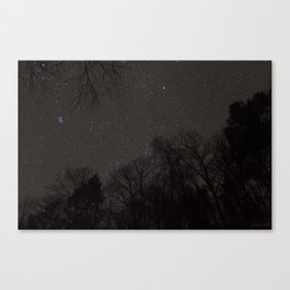 Stars from the Forest Floor Canvas Print