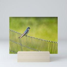 Tree Swallow Sitting on a Fence Mini Art Print