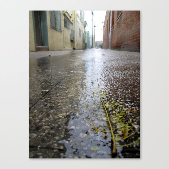 Rain leaf  Canvas Print