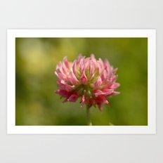 Pink Clover 5033 Art Print