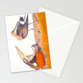 Hudsonian Godwit Bird Stationery Cards