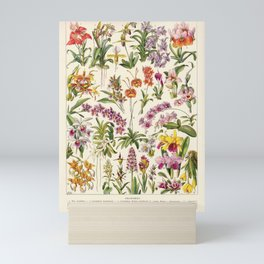 Adolphe Millot - Orchids - French vintage botanical illustration Mini Art Print