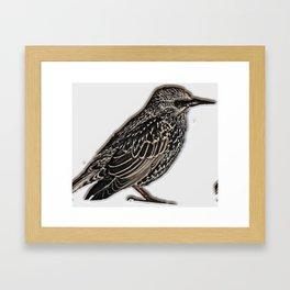Norfolk sparrow Framed Art Print