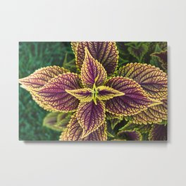 Plant Patterns - Coleus Colors Metal Print
