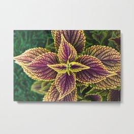 Plant Patterns - Coleus Colors Metal Print