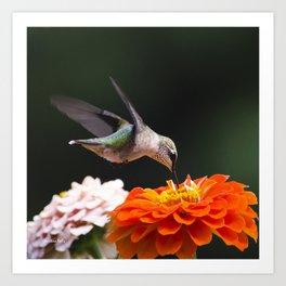 Hummingbird and Flowers Art Print