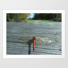 Dragon Fly Ready for Take Off Art Print