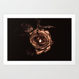 (he called me) the Wild rose Art Print